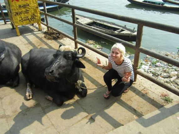 cow moo 2