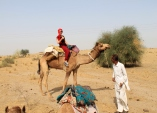 Camel trekking, Rajasthan, India